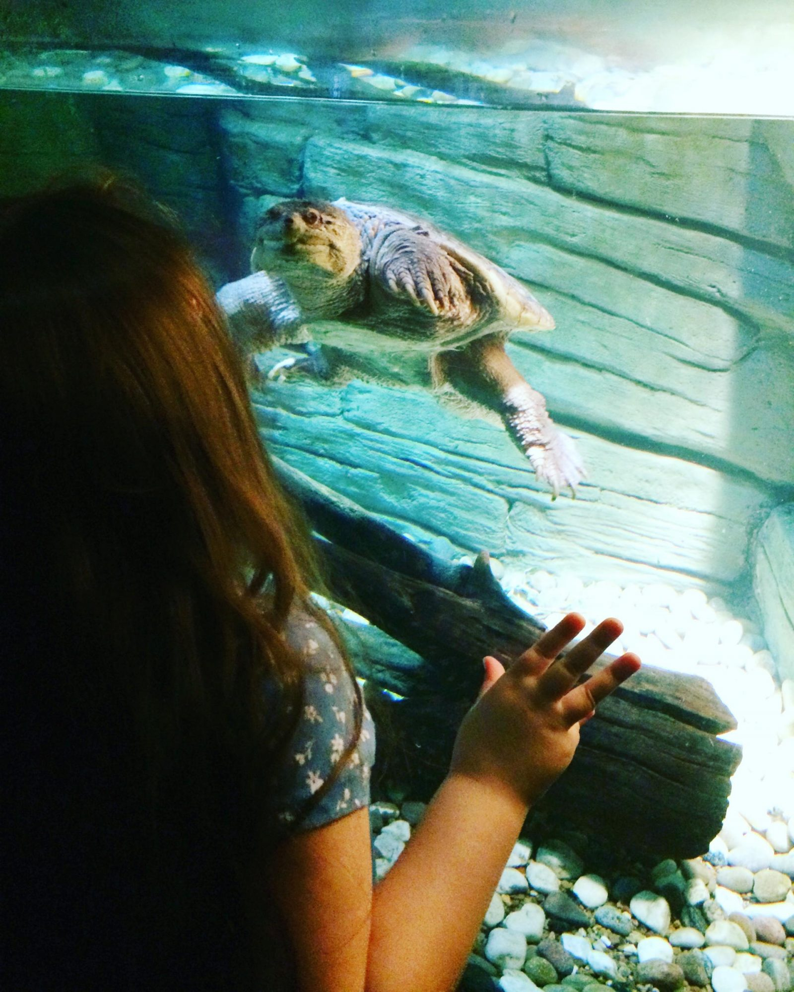 Can you #BraveTheBugs at the new Rainforest Adventure at Sea Life London?