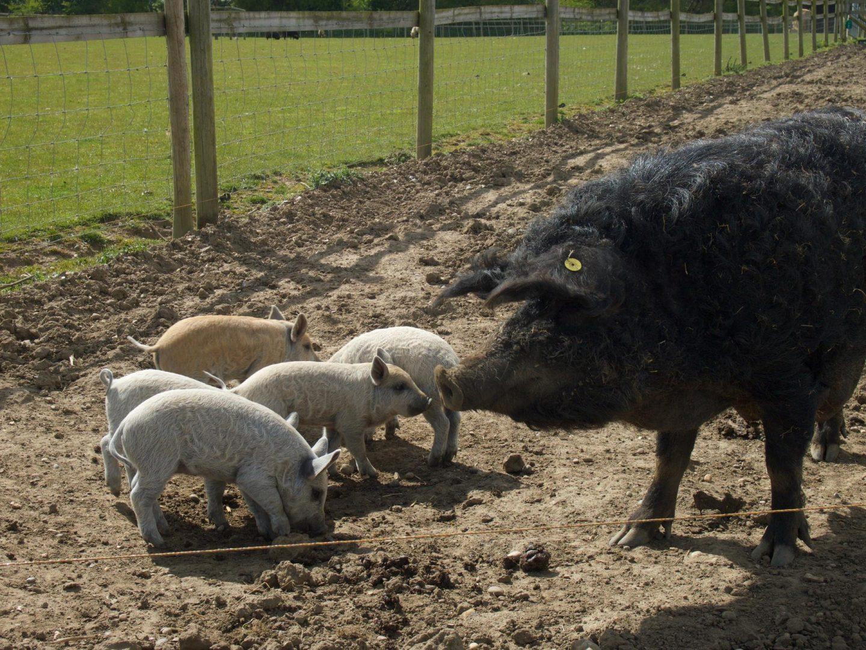 Hatfield Park Farm