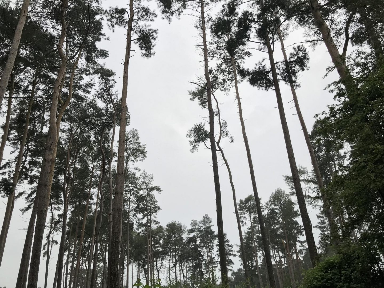 My Sunday Photo – Into the woods