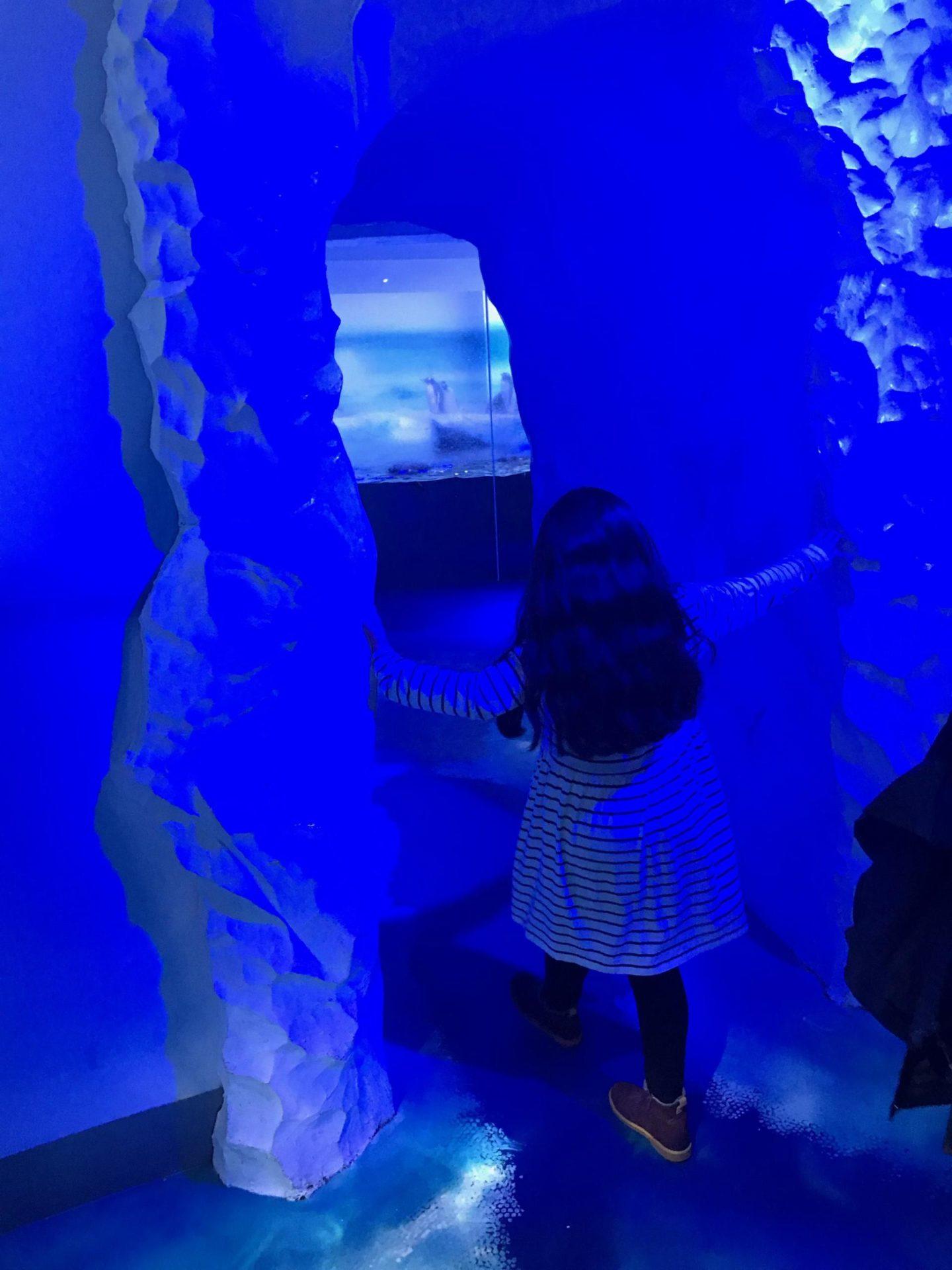 A Polar Adventure at SEA LIFE London